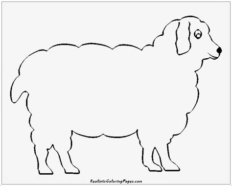 simple animal coloring pages realistic coloring pages