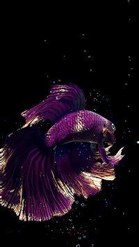 betta fish  wallpaper  apk
