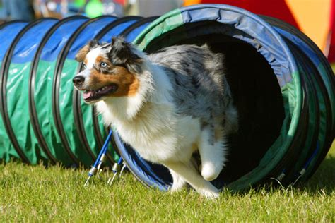 most athletic dogs the 5 most athletic breeds photo gallery
