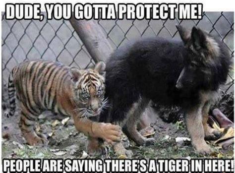 Animal Meme Pictures - funny animal meme