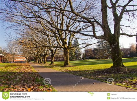 College Trees - autumn trees and leaves on college cus royalty free