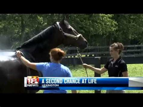 new listing aims to bring new life to grand avenue arts new vocations aims to give new life to retired racehorses
