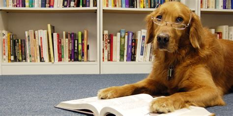 picture books about dogs reading books to shelter dogs makes the world a bit