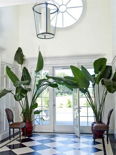 tropical decor inspiration feng shui interior design zimmerpflanzen bilder gem 252 tliche deko ideen mit topfpflanzen