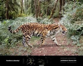 Prehistoric Jaguar Longdan Tiger Panthera Zdanskyi