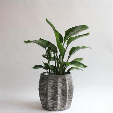 order potted plants  plant arrangements