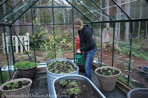 winter greenhouse gardening winter gardening growing lettuce in a greenhouse one