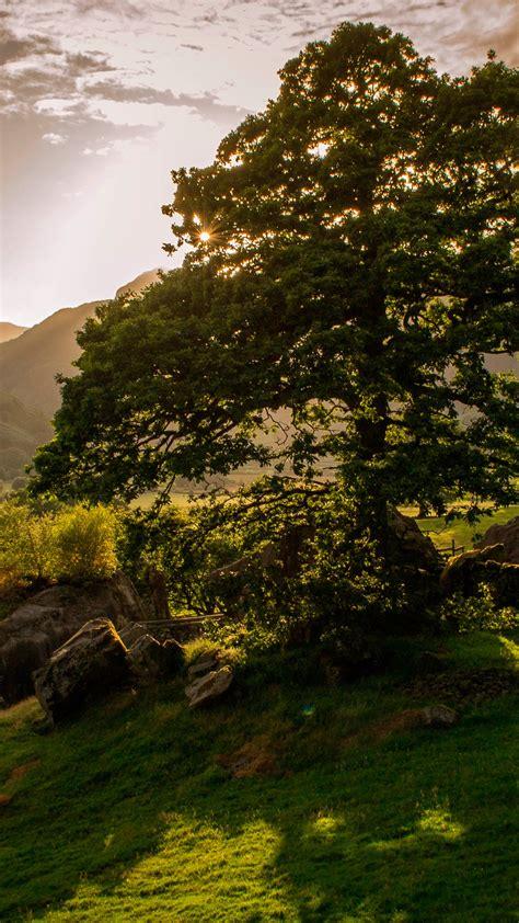 wallpaper ireland   wallpaper trees hills meadows sunset nature