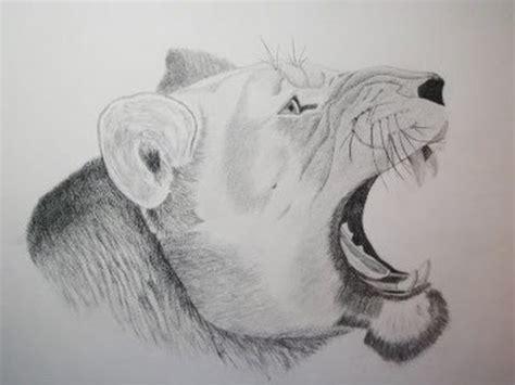 dibujar animales salvajes a lapiz imagui dibujos de leones a lapiz paso a paso imagui