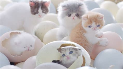 Cat Food Meo Kitten this just in kittens hatch from eggs with cats