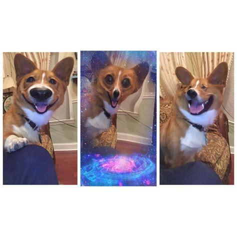 snapchat filters   dog