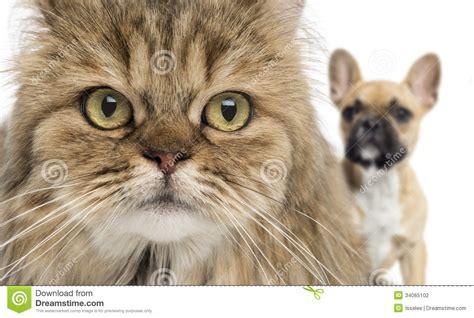 un gato y un primer de un gato y de un perro que ocultan detr 225 s aislado fotograf 237 a de archivo imagen 34065102