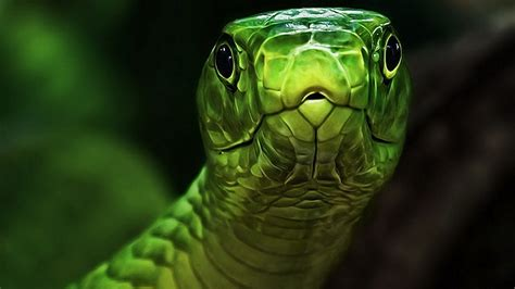 wallpaper green face green snake head wallpapers and images wallpapers