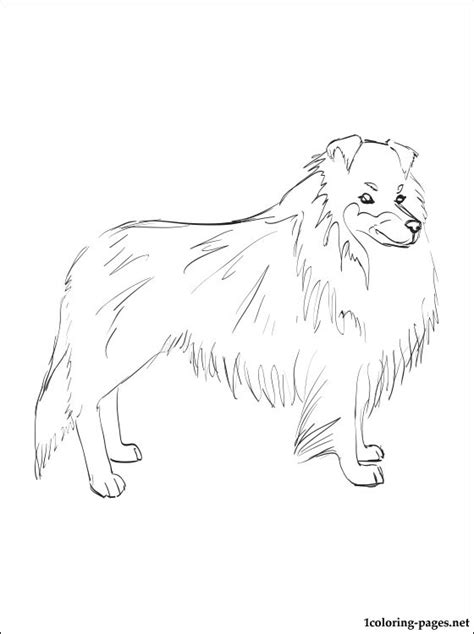 sheep dog coloring page shetland sheepdog coloring page coloring pages