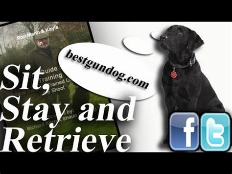 how to a to fetch birds clicker a bird retrieve part 1 shaping and chaining the basic retrieve
