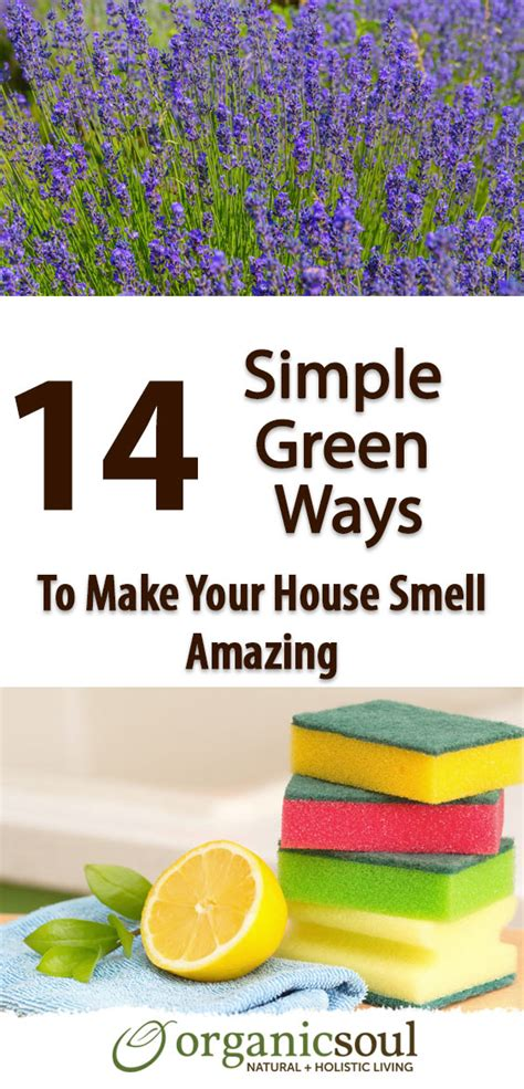 How To Make Your House Green | how to make your house green my web value