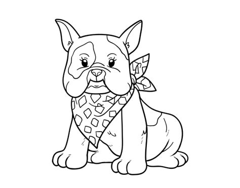 french bulldog coloring page coloringcrew com