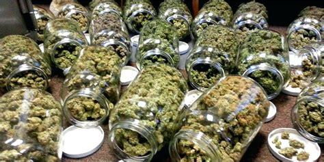 cannabis  process  drying  curing marijuanatm