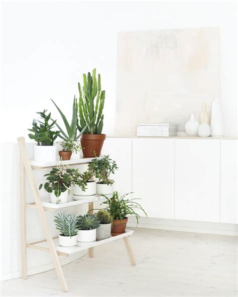 decorate with potted plants home 60 exles as you