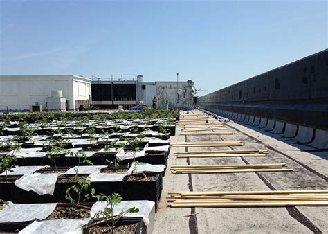 orto terrazza esempio di orto pensile in terrazza i progetti di