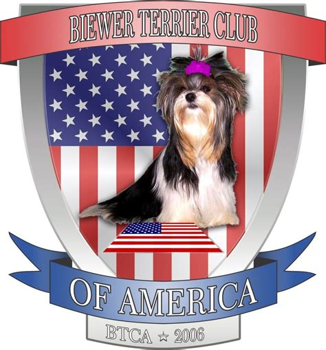 kennel club havanese about us havanese puppies ft myers fl lordocs