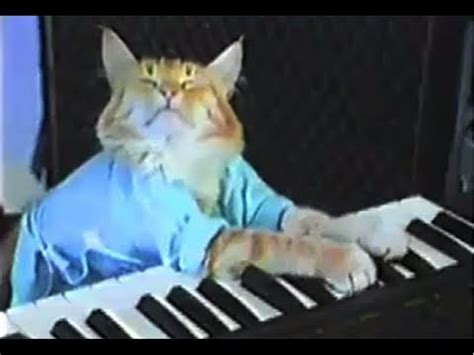 Cat Playing Piano Meme - welcome to memespp com