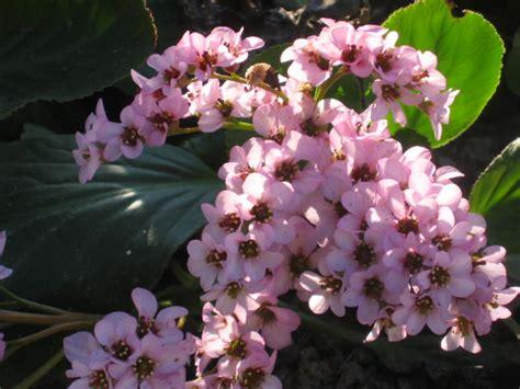 fiori di san giuseppe fiore di san giuseppe fare di una mosca