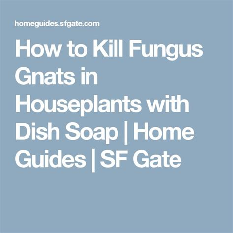 how to kill gnats in the house how to kill fungus gnats in houseplants with dish soap houseplants dishes and gardens