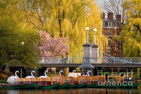 swan boats in the boston public garden swan boats in the boston public garden boston ma us