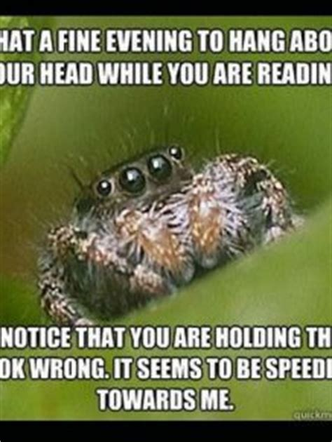 Misunderstood Spider Meme 16 Pics - daily mix part 897 fun