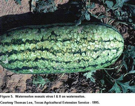 plant viral diseases list viral diseases of plants plant disease handbook