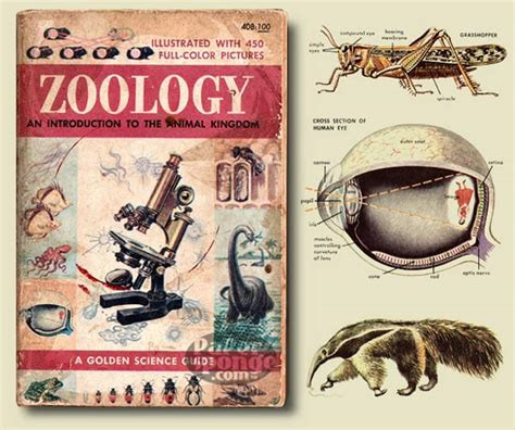 reference books for zoology papersponge vintage ephemera postcard paper book