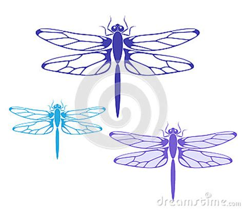 dragonfly stock photography image