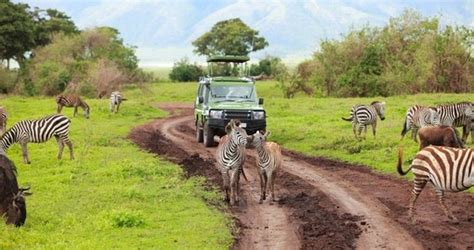 how to create african safari home d 233 cor home interior design african safari african vacations the middle east 2018