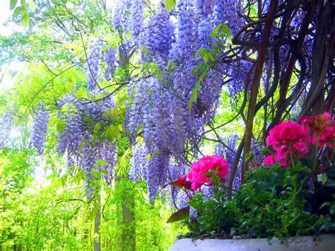 imagenes de flores naturales gratis paisajes con flores naturales fotografias y fotos para