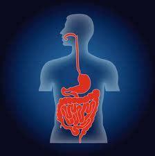 magen darm gesundheit