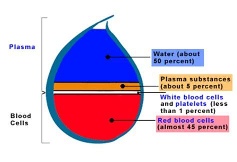 3 proteins found in plasma blood proteins plasma proteins serum proteins
