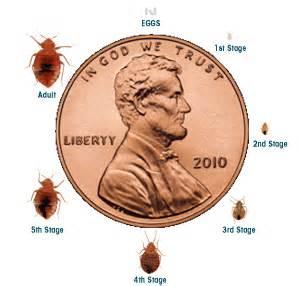 bed bug infestation timeline bed bugs totally suck fedhealth blog