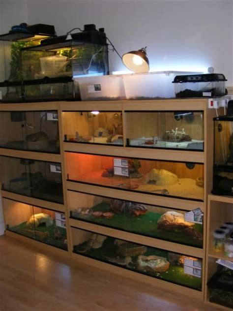 reptile room 17 best images about reptile enclosure on snake cages spider and vivarium