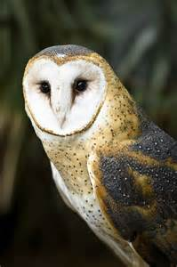 barn owl central coast vineyard team and pg e barn owl nest box