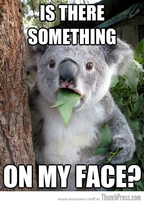 Koala Meme - koala bear with cake ideas and designs