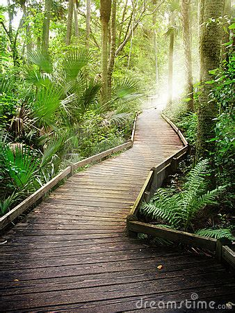 forest path stock images image