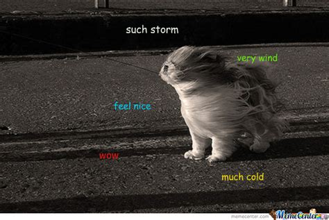 Storm Meme - doge much storm by andy0 meme center