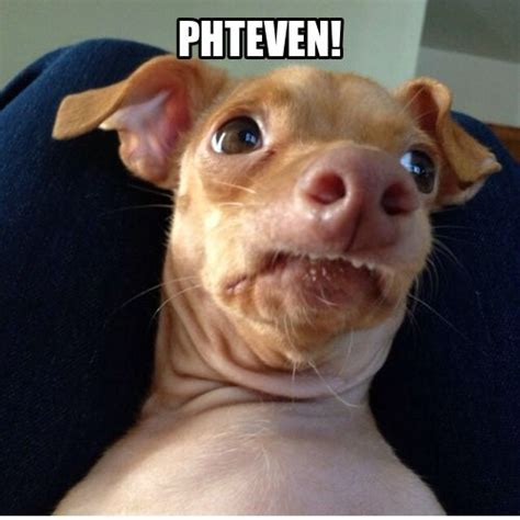 Phteven Dog Meme - phteven phteven s phan club pinterest cas laughing and cats
