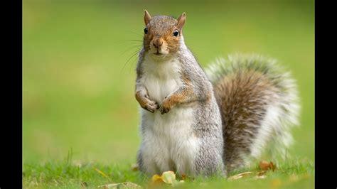 animal squirrel wallpapers desktop phone tablet