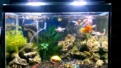 desain aquarium air tawar aquarium air tawar youtube