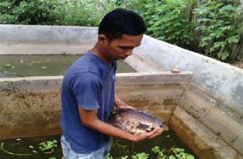 Bibit Ikan Gurame Di Bandar Lung selalu ditolak melamar kerja warga kotabumi sukses