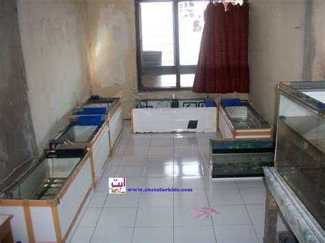 Jual Bibit Ikan Arwana Brazil jual benih arwana abata 081328030055 forum penjualan