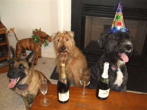new year for dogs 12 adorable dogs ready to celebrate new year s