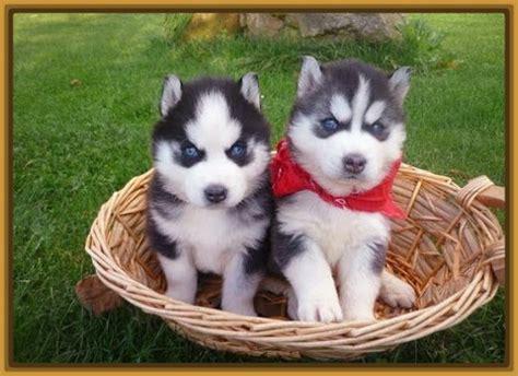 imagenes de animales lindos fotos cachorros perros lindos imagenes de cachorros